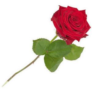 Attractieverhuur = rode-roos-valentijn