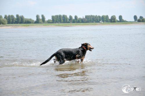 Mona im Rhein