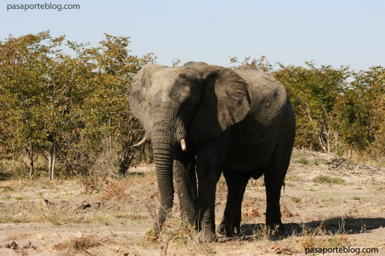 elefantes cruzando la carretera viaje a namibia