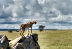 seguro de viaje Tanzania
