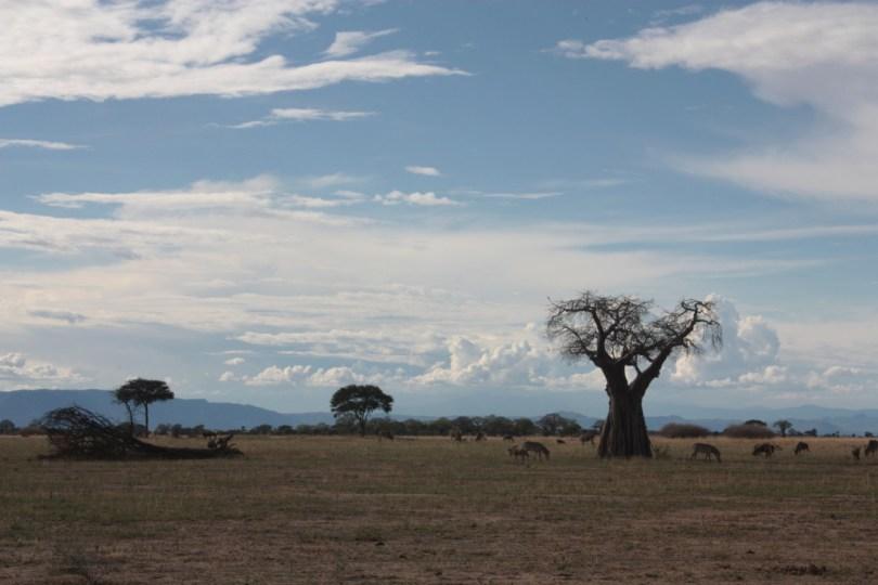 Baobab Taranguire