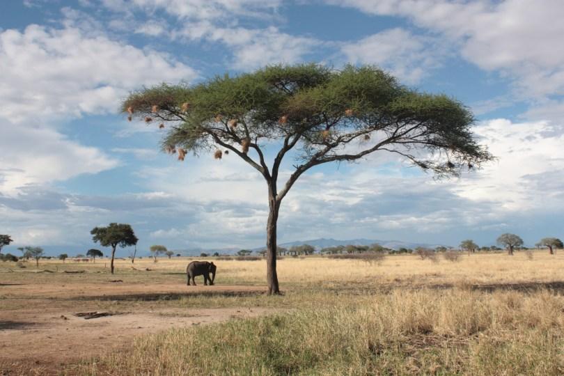 Safari Taranguire