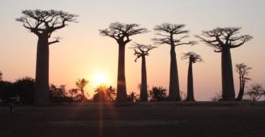 Itinerario de viaje a Madagascar