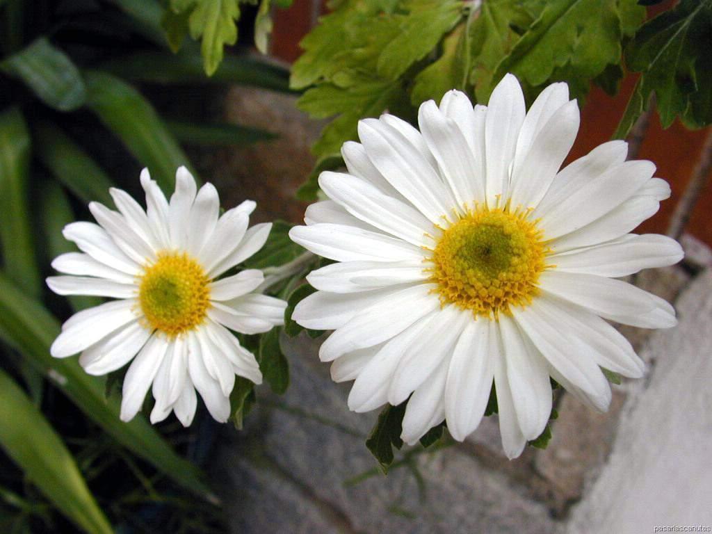Fotos de flores 4