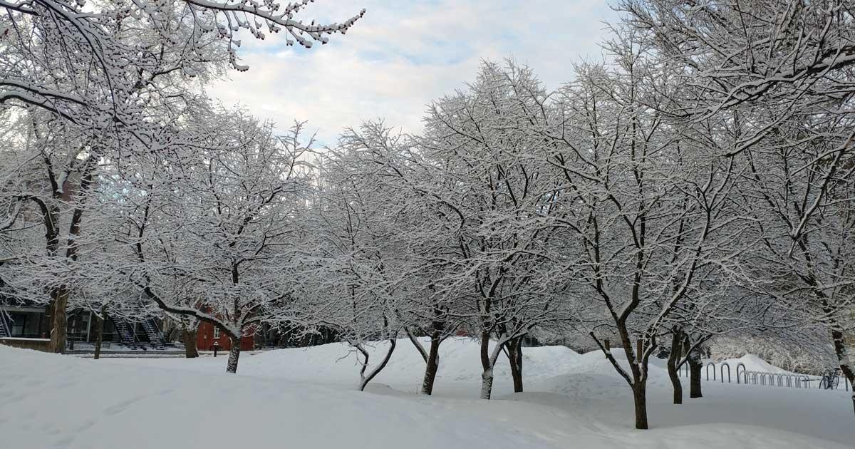 Paisible tempête de neige hivernale Québec