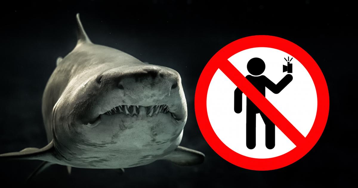 Les selfies, plus dangereux que les requins?