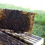 Пчеловодство Курсы и Обучение Киев Украина