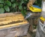 Секреты пчеловодов