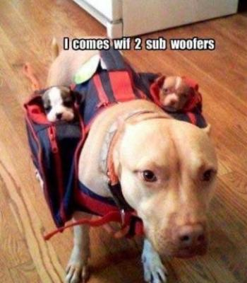 Dog and two sub woofers