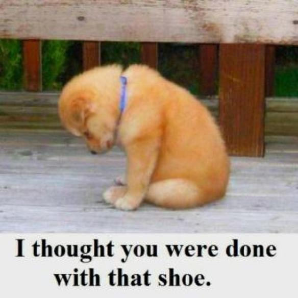 Naughty Puppy - I thought you were done with that shoe