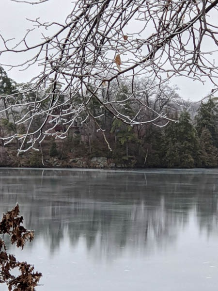 Ice coated twigs, shining frozen lake