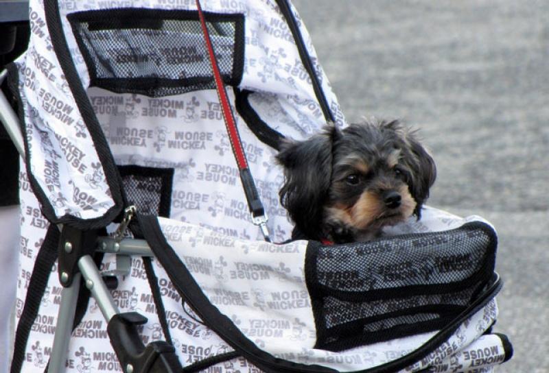 insegnare cane passeggino