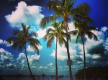 The beach at Founders Park, Islamorada.