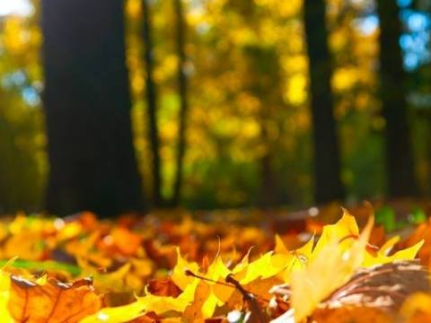 couleur-automne-nature