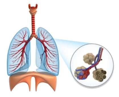 respiraiton et hematose