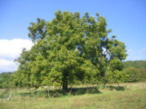 kartinki24_trees_0108