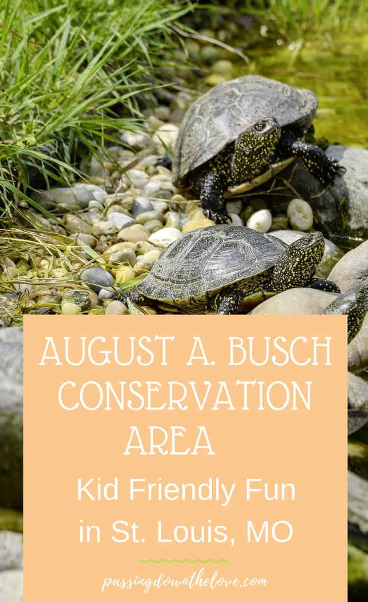 August A. Busch Memorial Conservation Area, Missouri.  Explore nature with the kids, fish, hike, picnic, and play.  Fun for all ages.