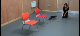 Expérience : les chats sont-ils attachés à leur maître ?
