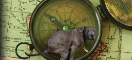 Les chiens s'alignent sur un axe nord-sud pour faire leurs besoins