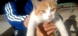 Marseille : le chat torturé aurait été retrouvé vivant