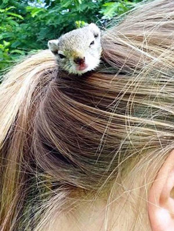Un écureuil orphelin a élu domicile dans la queue de cheval d'une adolescente