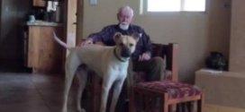 Atteint d'Alzheimer, il ne parle plus, sauf à son chien...