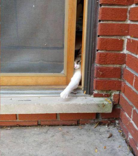 desirant-s-evader-en-etant-incognito-ce-chat-tente-de-passer-dans-l-ouverture-de-la-porte_124507_w460