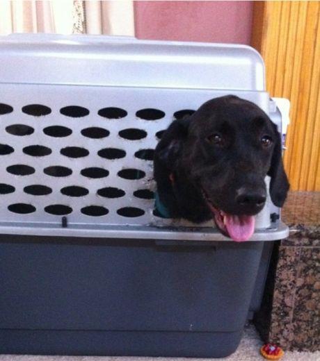 en-quete-de-liberte-ce-chien-s-est-retrouve-la-tete-coincee-dans-un-trou-d-une-cage_124497_w460