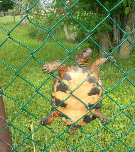 encore-une-demonstration-de-l-habilete-des-tortues_124513_w460