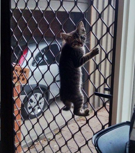 plus-habile-que-le-chien-le-chat-escalade-la-barriere-sans-aucun-probleme_124504_w460