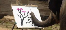 Vidéo : Suda, l'éléphante qui sait peindre