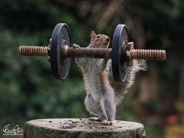 wildlife-photography-squirrels-max-ellis-12__880