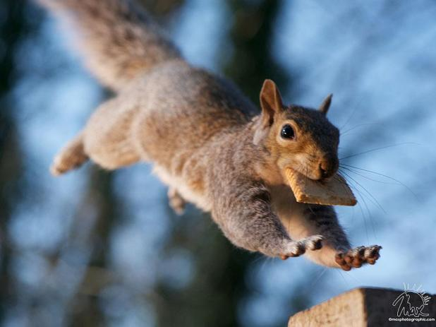 wildlife-photography-squirrels-max-ellis-25__880