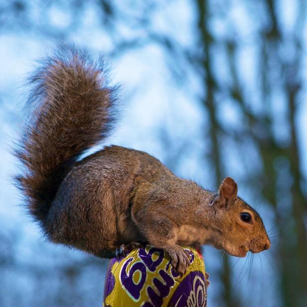 wildlife-photography-squirrels-max-ellis-26__880