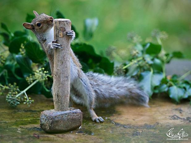 wildlife-photography-squirrels-max-ellis-7__880