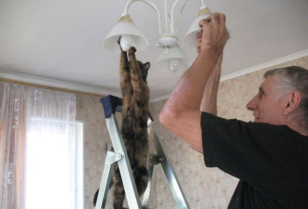 funny-animals-doing-human-things-29
