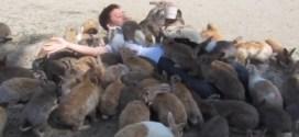 Vidéo : un homme totalement recouvert de lapins