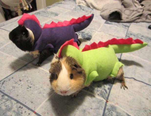 pet-halloween-costume-122__880