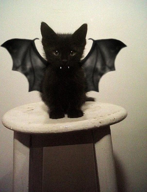 pet-halloween-costume-291__605