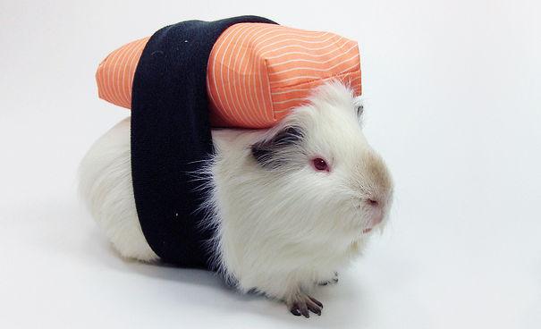 pet-halloween-costume-381__605