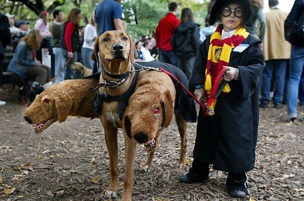 pet-halloween-costume-69__605