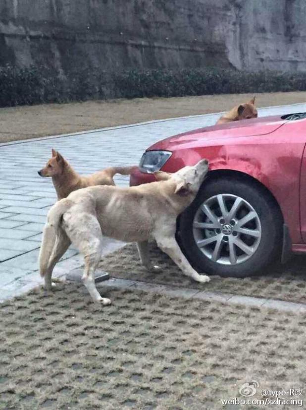 chiens-voiture-1