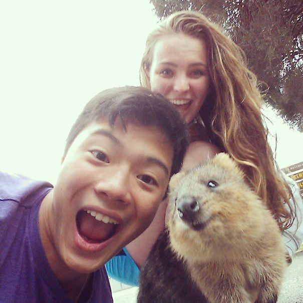 quokka-selfie-trend-cute-rodent-australia-21__605