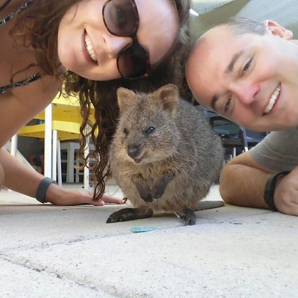 quokka-selfie-trend-cute-rodent-australia-6__605