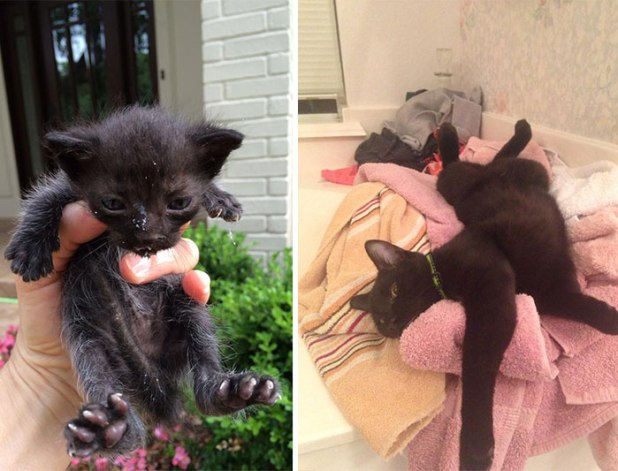 rescue-cat-abandoned-before-after-25__700