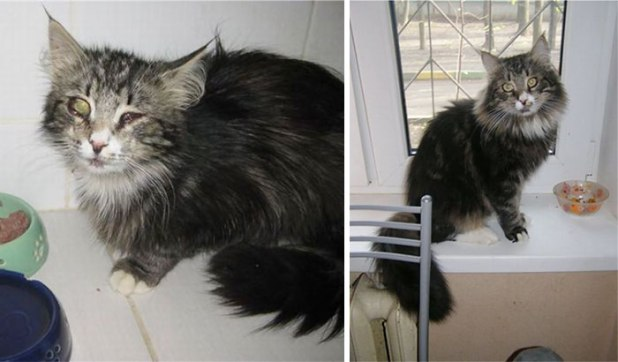 rescue-cat-abandoned-before-after-62__700