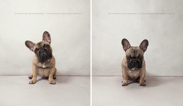 animal-portraits-dry-wet-dog-serenah-hodson-9