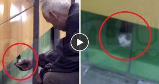 Vidéo. Un chat emmuré pendant 5 ans retrouve la liberté