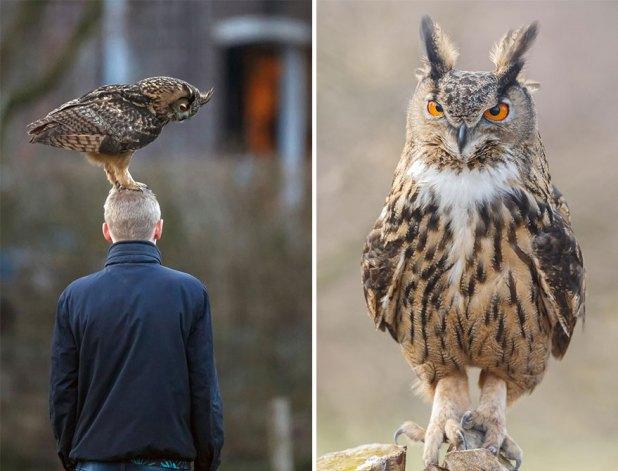 owl-lands-on-head-netherlands-noordeinde-9