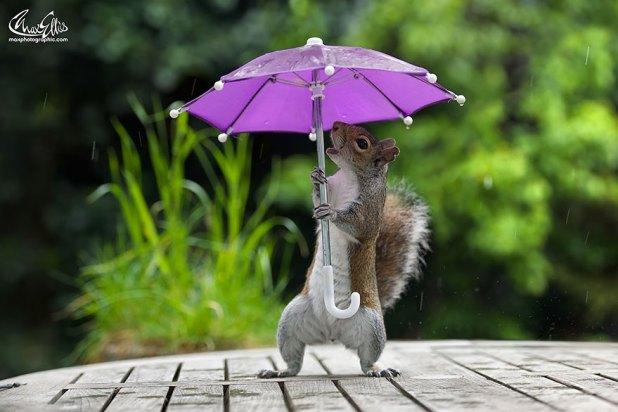 Avez-vous déjà vu... un écureuil avec un parapluie ? (photos)